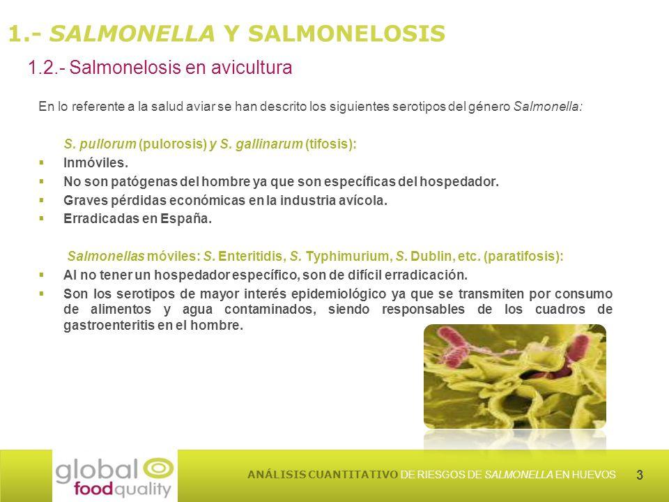 3 ANÁLISIS CUANTITATIVO DE RIESGOS DE SALMONELLA EN HUEVOS En lo referente a la salud aviar se han descrito los siguientes serotipos del género Salmonella: S.
