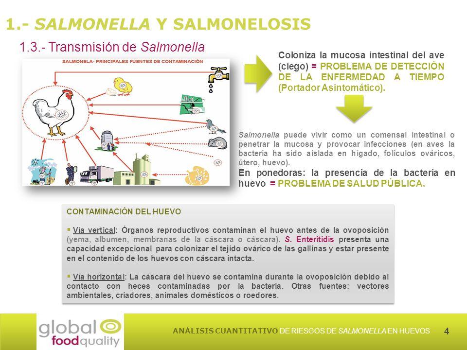4 ANÁLISIS CUANTITATIVO DE RIESGOS DE SALMONELLA EN HUEVOS CONTAMINACIÓN DEL HUEVO Vía vertical: Órganos reproductivos contaminan el huevo antes de la ovoposición (yema, albumen, membranas de la cáscara o cáscara).