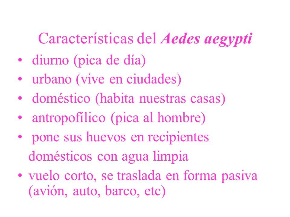 Características del Aedes aegypti diurno (pica de día) urbano (vive en ciudades) doméstico (habita nuestras casas) antropofílico (pica al hombre) pone