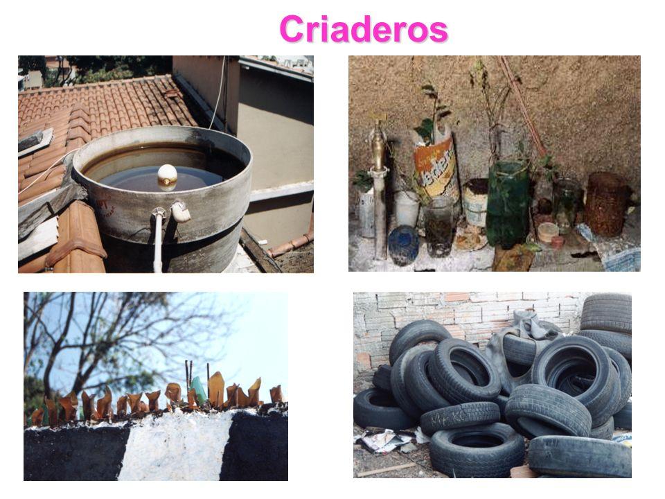 Criaderos