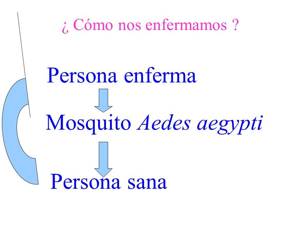 Años979899000102030405060708 Ciudades 66710912911 1215 Departamentos 546910 6567 7 Dispersión del Aedes aegypti