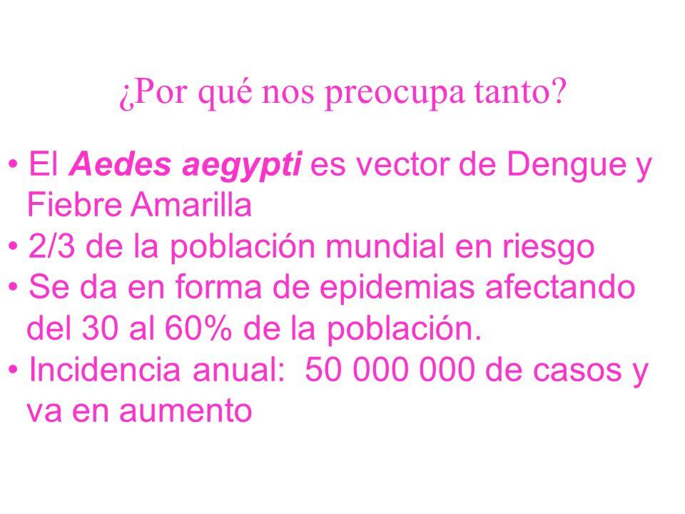 ¿Por qué nos preocupa tanto? El Aedes aegypti es vector de Dengue y Fiebre Amarilla 2/3 de la población mundial en riesgo Se da en forma de epidemias