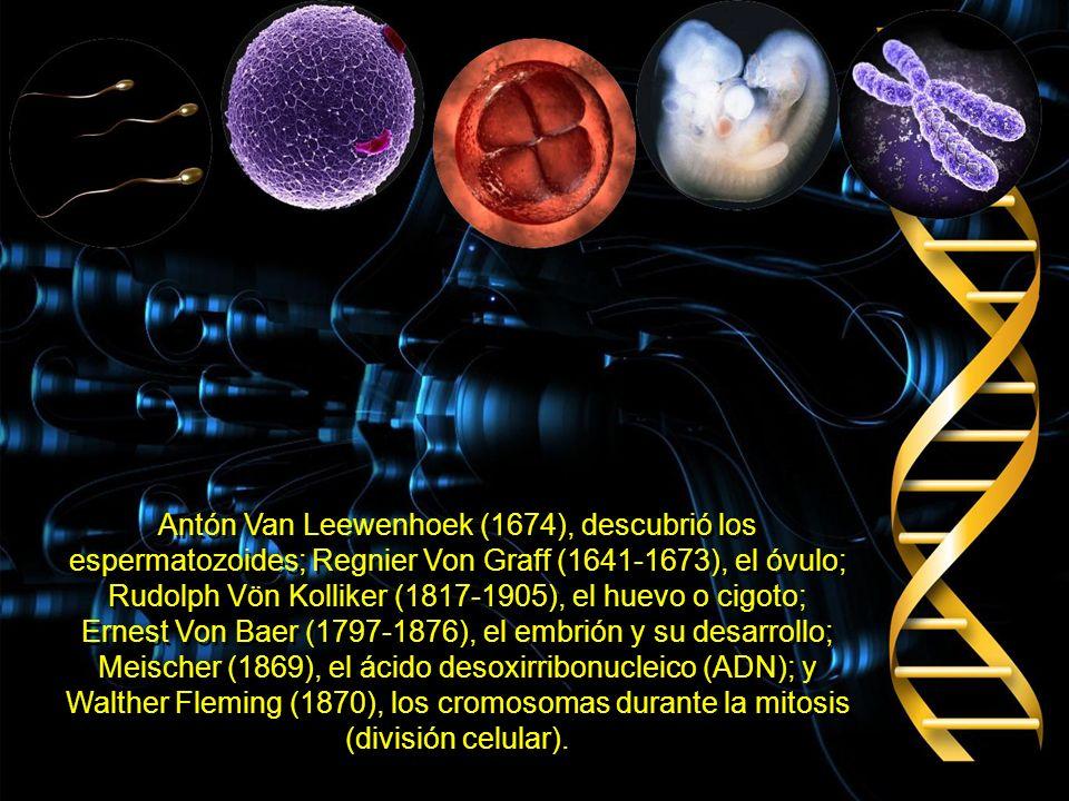 Entre 30 y 40 años después, 3 científicos, De Vries, Von Syseneg y Sir Kart E. Correns, trabajando en forma independiente, redescubrieron estas leyes
