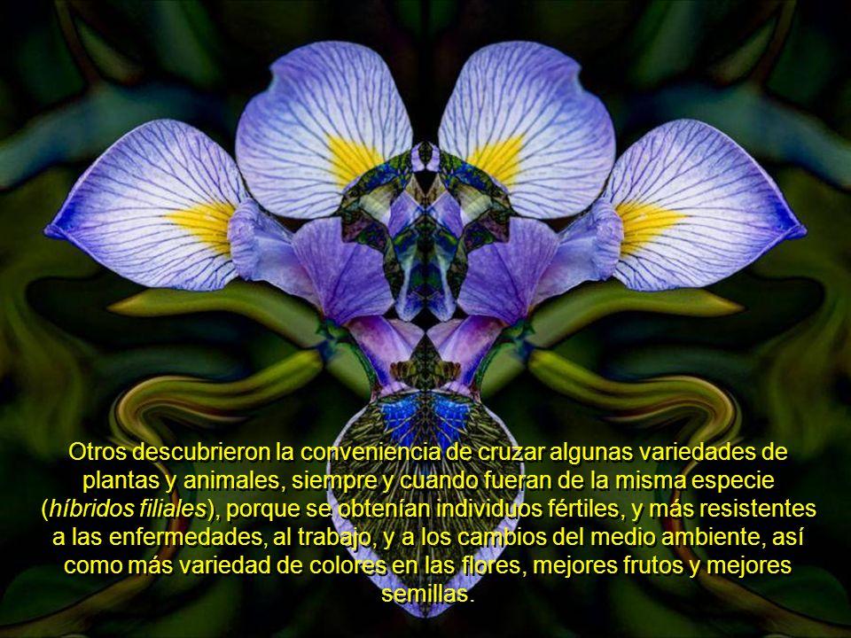 En muchas civilizaciones antiguas, se hizo de dominio general, el conocimiento de qué rasgos predominantes en la descendencia de plantas y animales, l