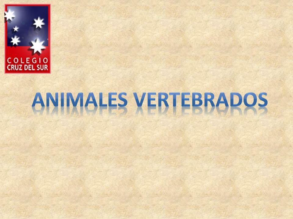 * A los animales con columna vertebral se les llama vertebrados.