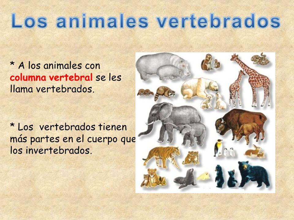 * A los animales con columna vertebral se les llama vertebrados. * Los vertebrados tienen más partes en el cuerpo que los invertebrados.