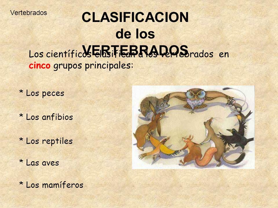 CLASIFICACION de los VERTEBRADOS Los científicos clasifican a los vertebrados en cinco grupos principales: * Los peces * Los anfibios * Los reptiles *
