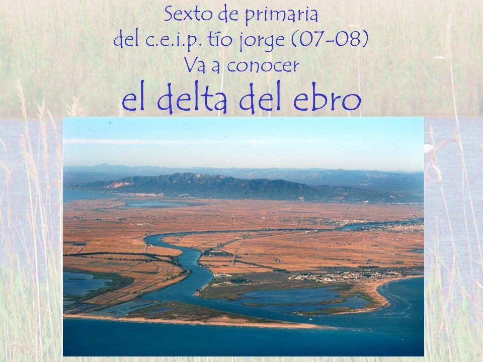 Sexto de primaria del c.e.i.p. tío jorge (07-08) Va a conocer el delta del ebro