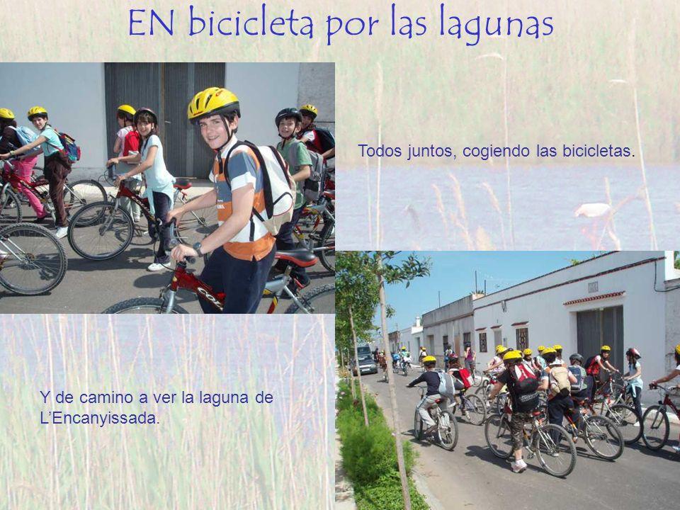 Todos juntos, cogiendo las bicicletas. Y de camino a ver la laguna de LEncanyissada. EN bicicleta por las lagunas