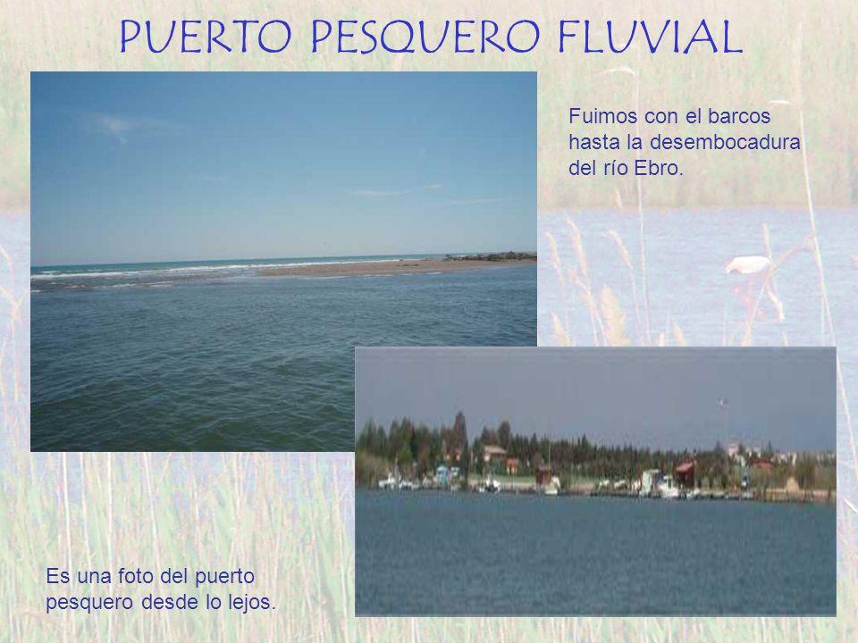 Fuimos con el barcos hasta la desembocadura del río Ebro. Es una foto del puerto pesquero desde lo lejos. PUERTO PESQUERO FLUVIAL
