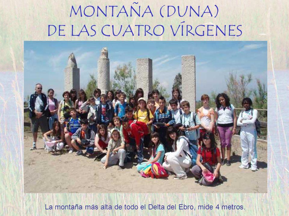 MONTAÑA (DUNA) DE LAS CUATRO VÍRGENES La montaña más alta de todo el Delta del Ebro, mide 4 metros.