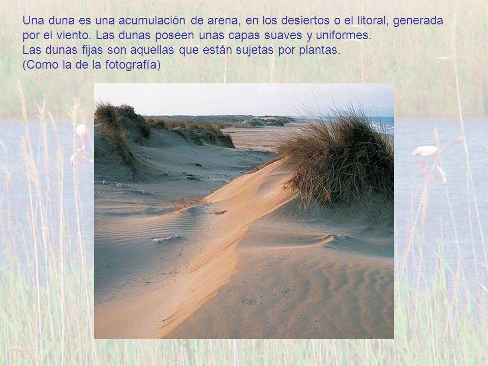 Una duna es una acumulación de arena, en los desiertos o el litoral, generada por el viento. Las dunas poseen unas capas suaves y uniformes. Las dunas