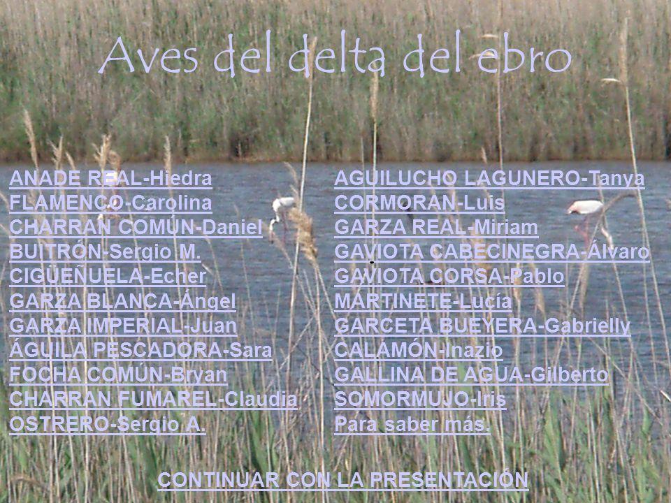 Aves del delta del ebro ANADE REAL-Hiedra FLAMENCO-Carolina CHARRAN COMÚN-Daniel BUITRÓN-Sergio M. CIGÜEÑUELA-Echer GARZA BLANCA-Ángel GARZA IMPERIAL-
