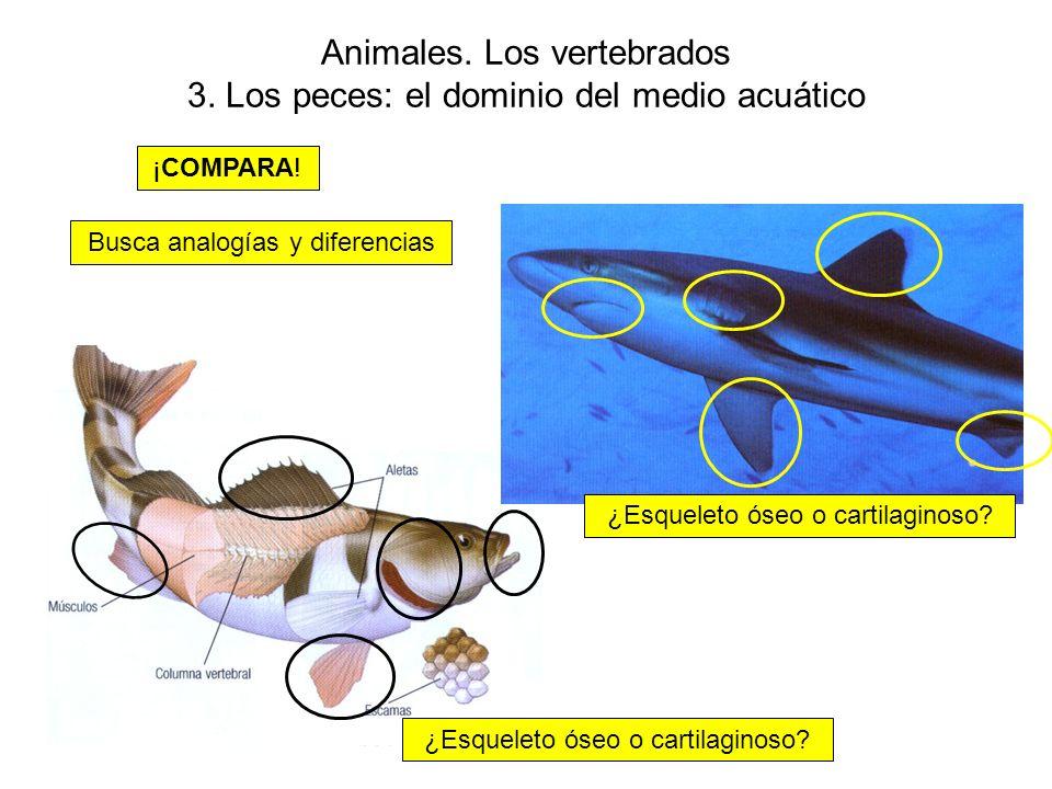Animales.Los vertebrados 3. Los peces: el dominio del medio acuático ¡COMPARA.