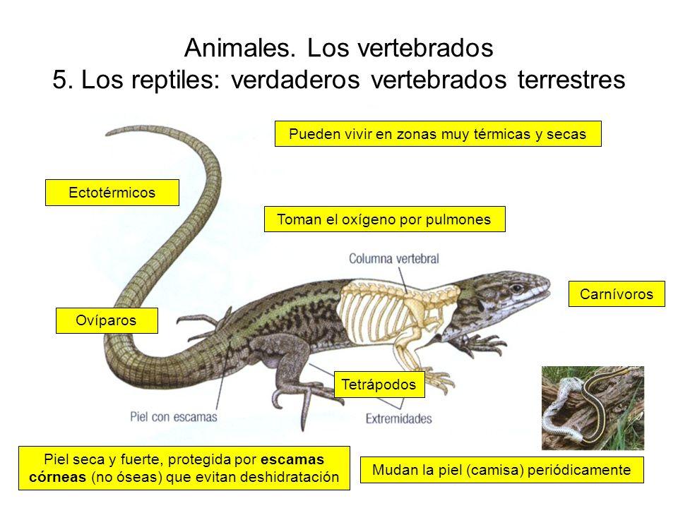 Animales.Los vertebrados 5.