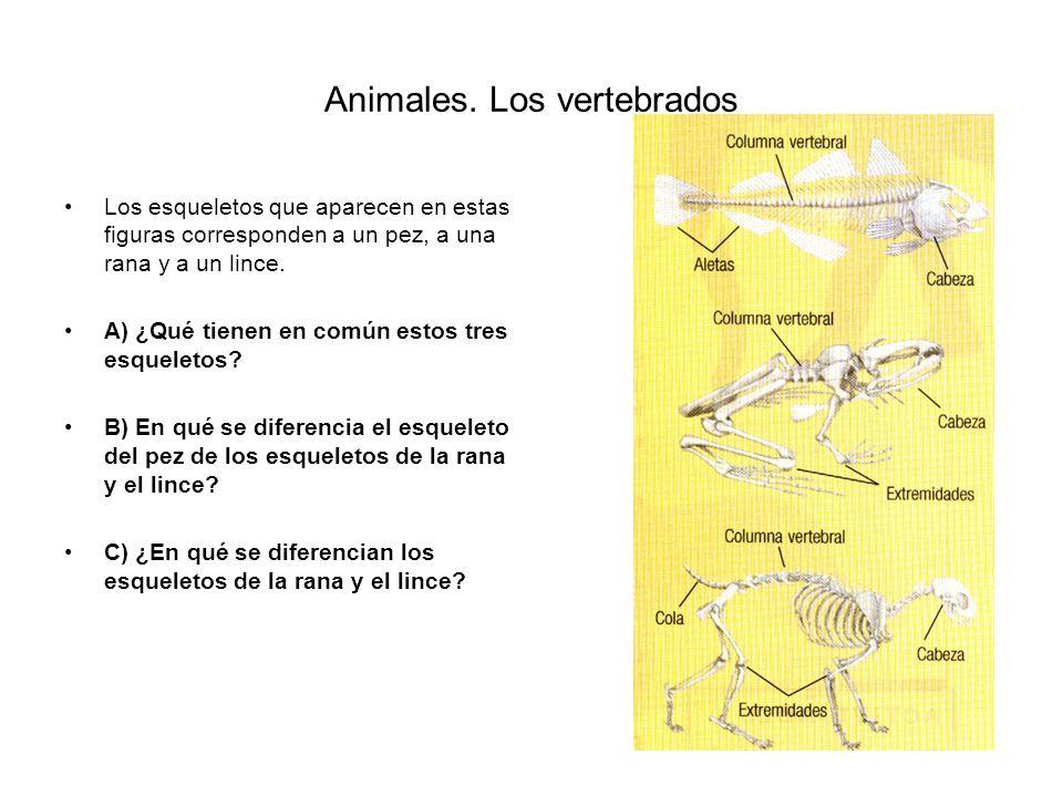 Animales. Los vertebrados ACTIVIDADES 23 24 25 26 27 28 30 31 32
