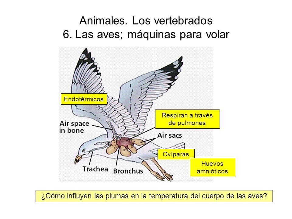 Animales.Los vertebrados 6.