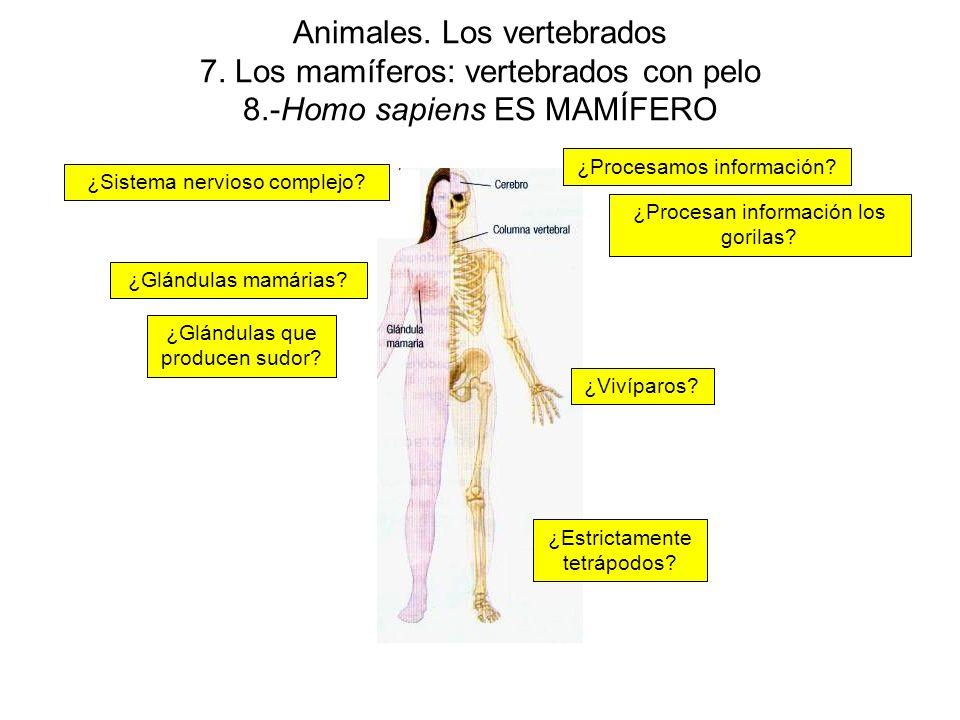 Animales.Los vertebrados 7.