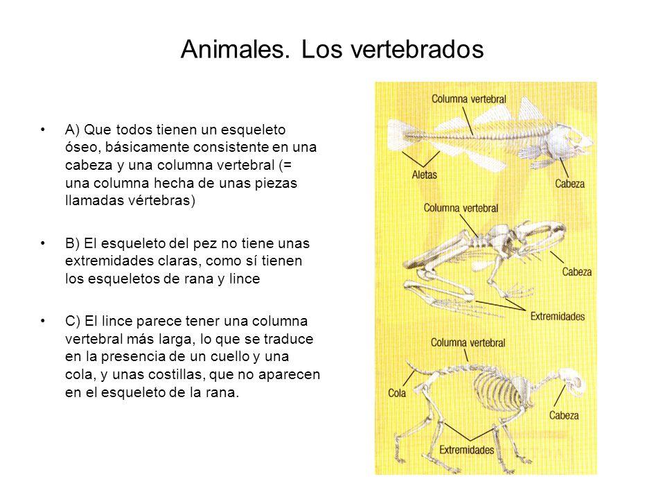 Animales.Los vertebrados 4.