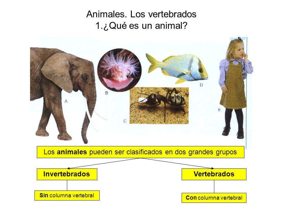 Animales.Los vertebrados 1.¿Qué es un animal.