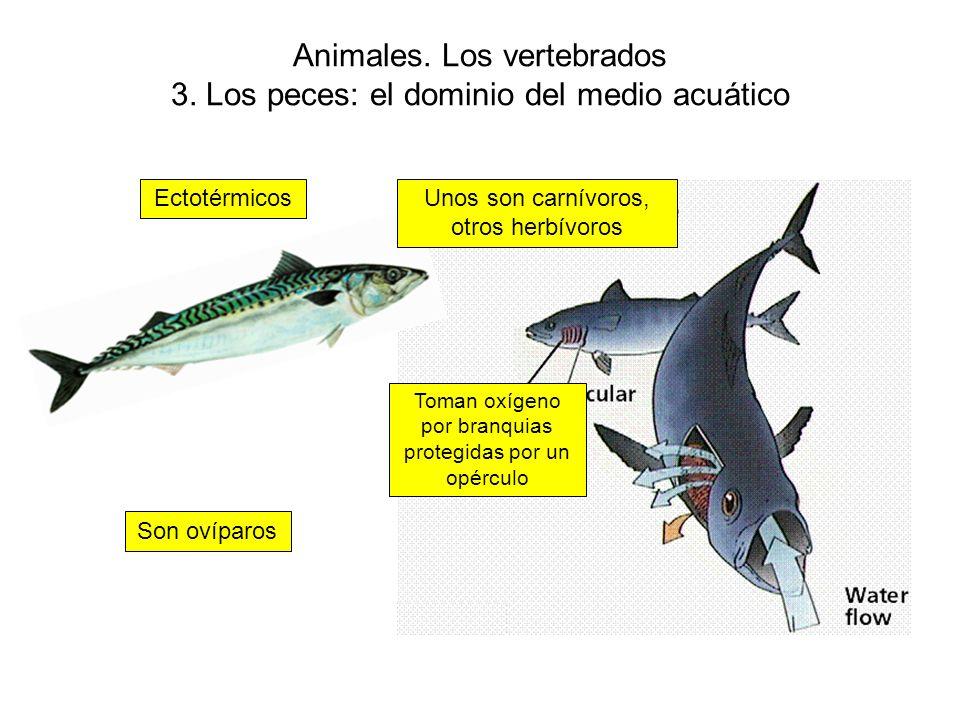 Animales.Los vertebrados 3.