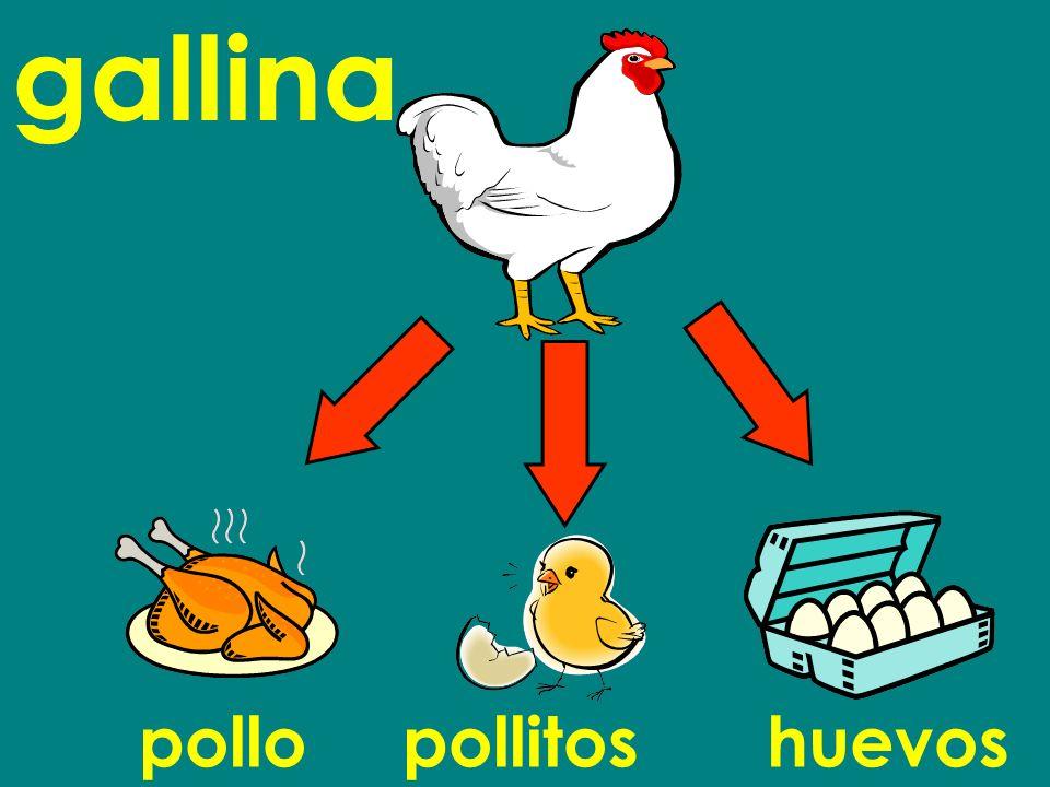 pollopollitoshuevos gallina