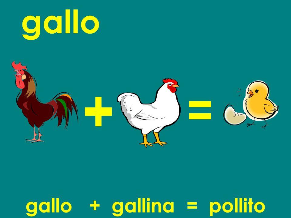 gallo gallo + gallina = pollito