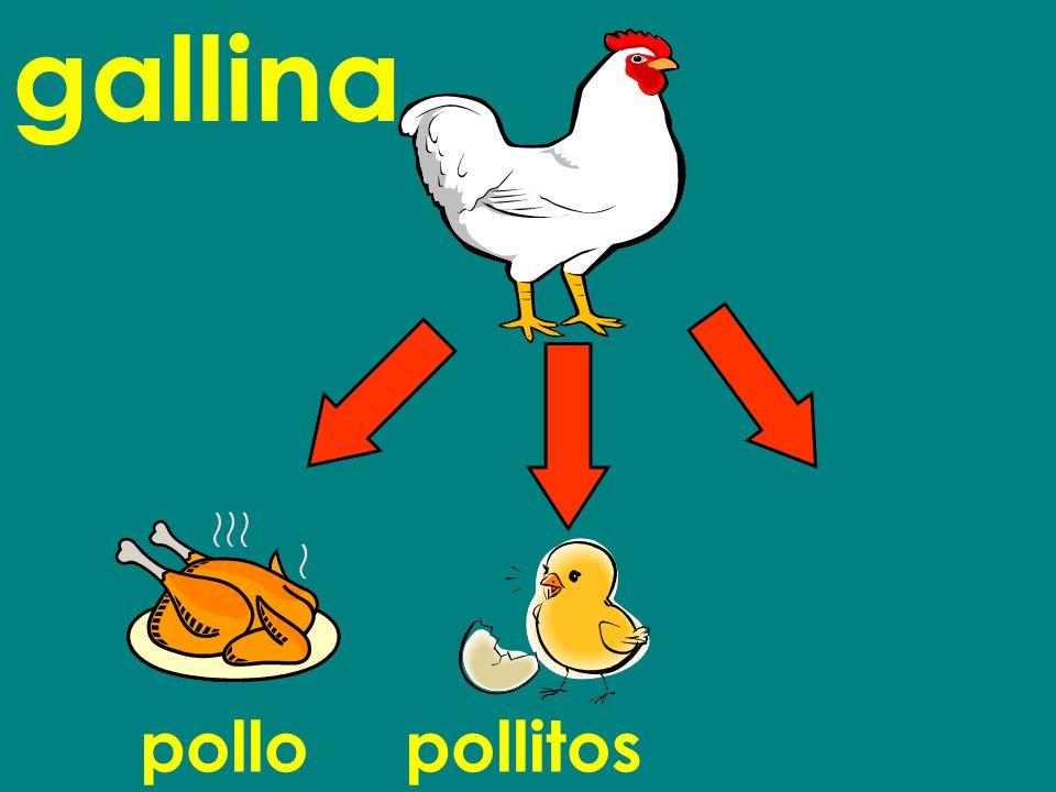 pollopollitos gallina