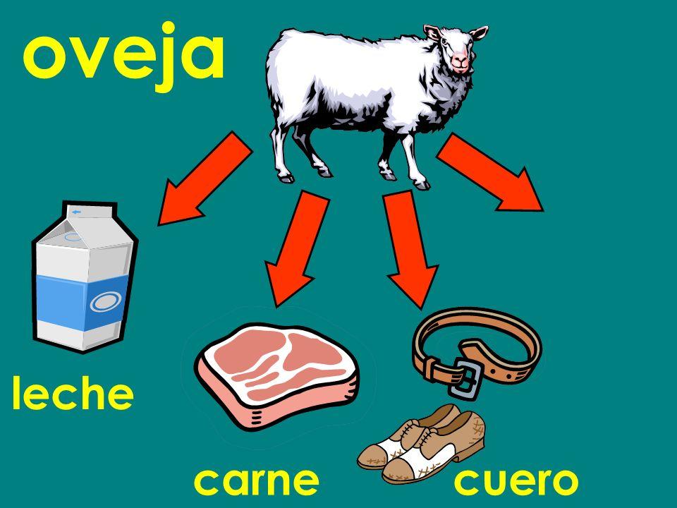 oveja leche carnecuero