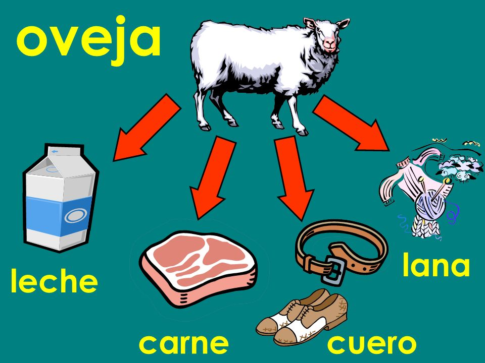 oveja leche carnecuero lana
