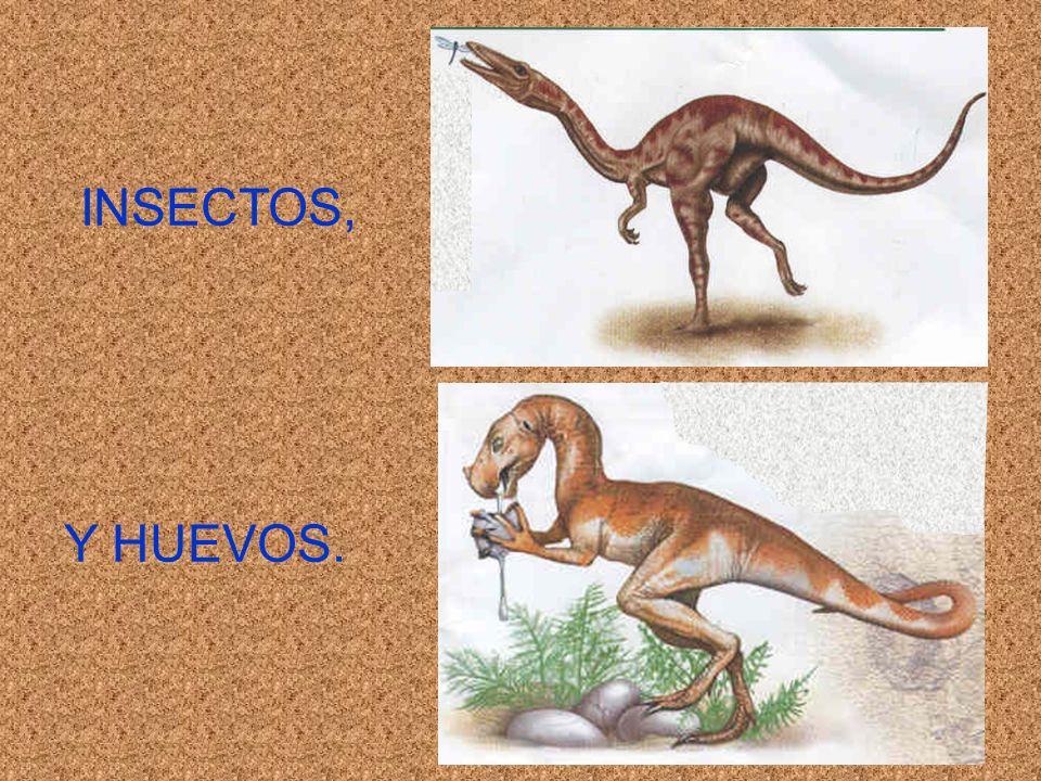 INSECTOS, Y HUEVOS.