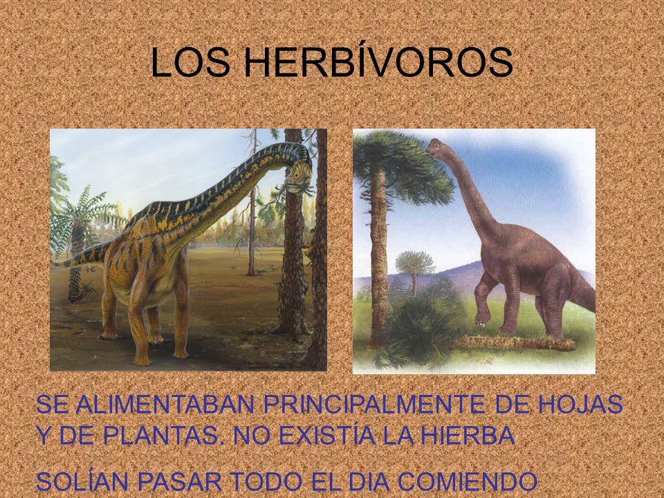 LOS HERBÍVOROS SE ALIMENTABAN PRINCIPALMENTE DE HOJAS Y DE PLANTAS.