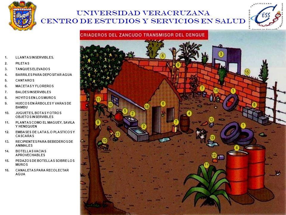UNIVERSIDAD VERACRUZANA CENTRO DE ESTUDIOS Y SERVICIOS EN SALUD 1.LLANTAS INSERVIBLES. 2.PILETAS 3.TANQUES ELEVADOS 4.BARRILES PARA DEPOSITAR AGUA 5.C