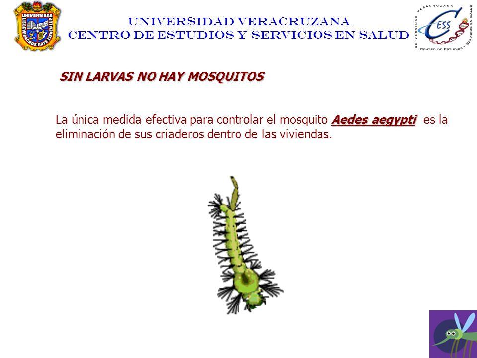UNIVERSIDAD VERACRUZANA CENTRO DE ESTUDIOS Y SERVICIOS EN SALUD SIN LARVAS NO HAY MOSQUITOS Aedes aegypti La única medida efectiva para controlar el m