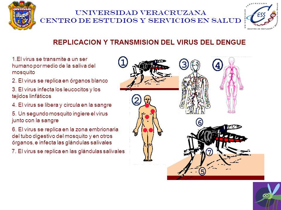 UNIVERSIDAD VERACRUZANA CENTRO DE ESTUDIOS Y SERVICIOS EN SALUD REPLICACION Y TRANSMISION DEL VIRUS DEL DENGUE 1.El virus se transmite a un ser humano