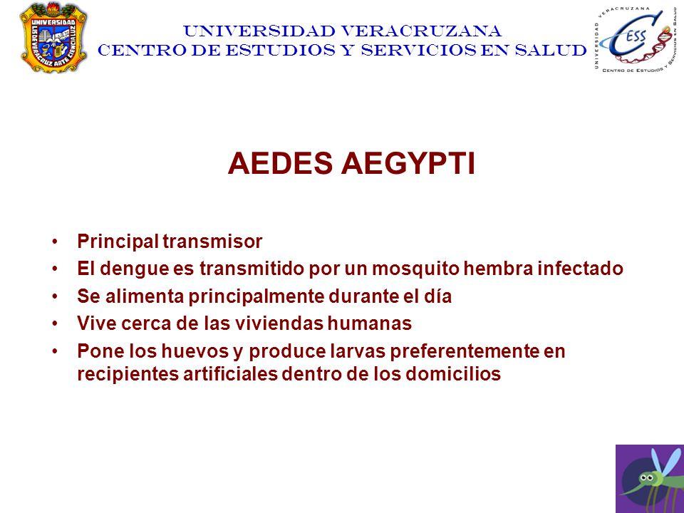 UNIVERSIDAD VERACRUZANA CENTRO DE ESTUDIOS Y SERVICIOS EN SALUD AEDES AEGYPTI Principal transmisor El dengue es transmitido por un mosquito hembra inf