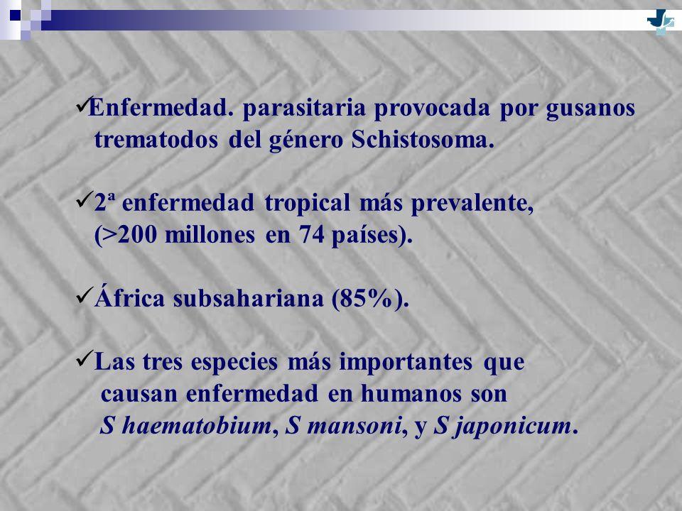 Enfermedad. parasitaria provocada por gusanos trematodos del género Schistosoma. 2ª enfermedad tropical más prevalente, (>200 millones en 74 países).