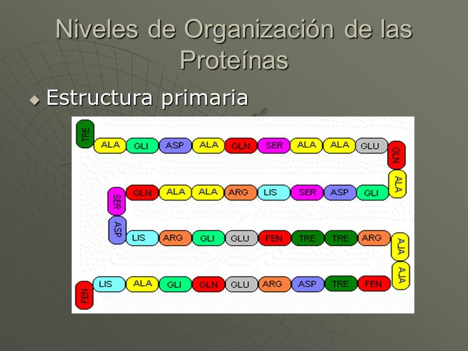 Niveles de Organización de las Proteínas Estructura primaria