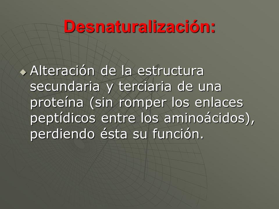 Desnaturalización: Alteración de la estructura secundaria y terciaria de una proteína (sin romper los enlaces peptídicos entre los aminoácidos), perdi