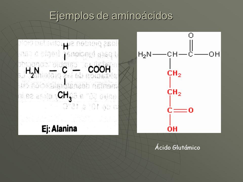 Ejemplos de aminoácidos Ácido Glutámico