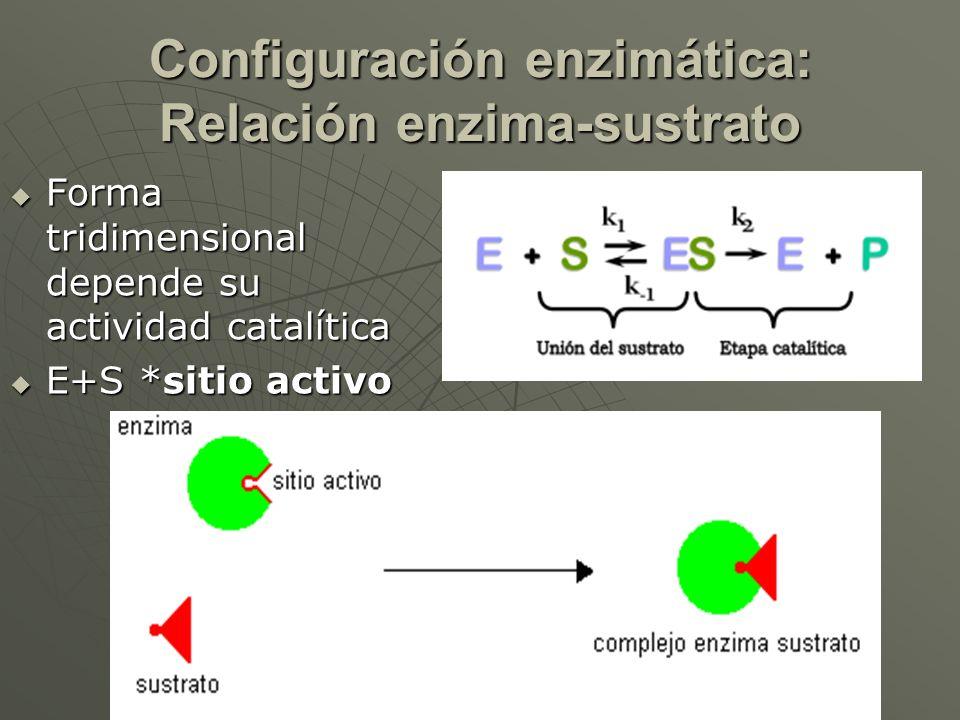 Configuración enzimática: Relación enzima-sustrato Forma tridimensional depende su actividad catalítica Forma tridimensional depende su actividad cata