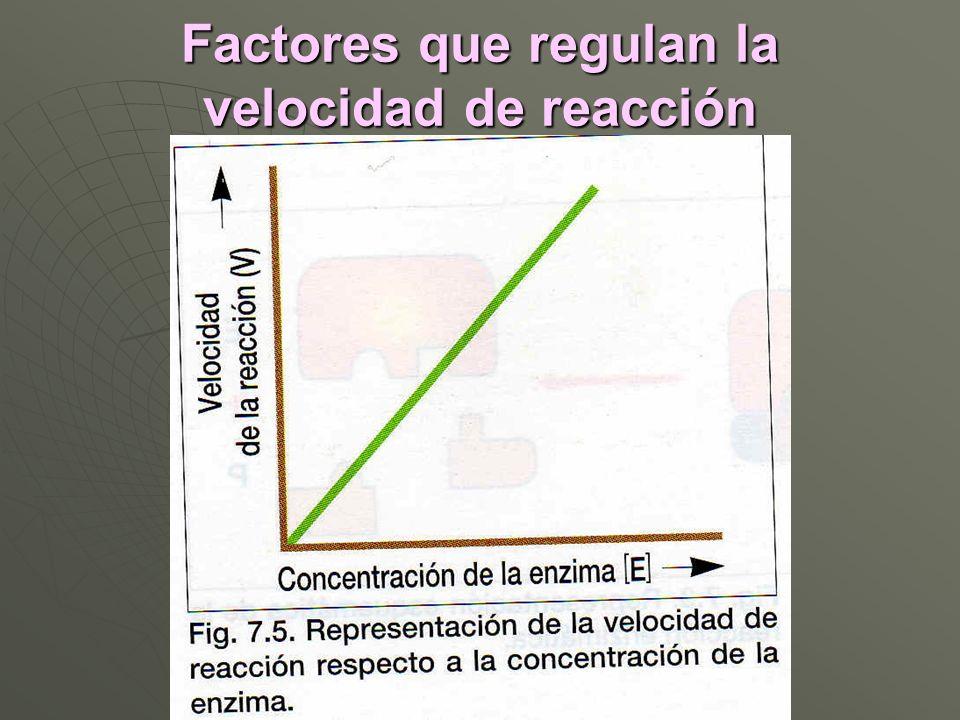 Factores que regulan la velocidad de reacción