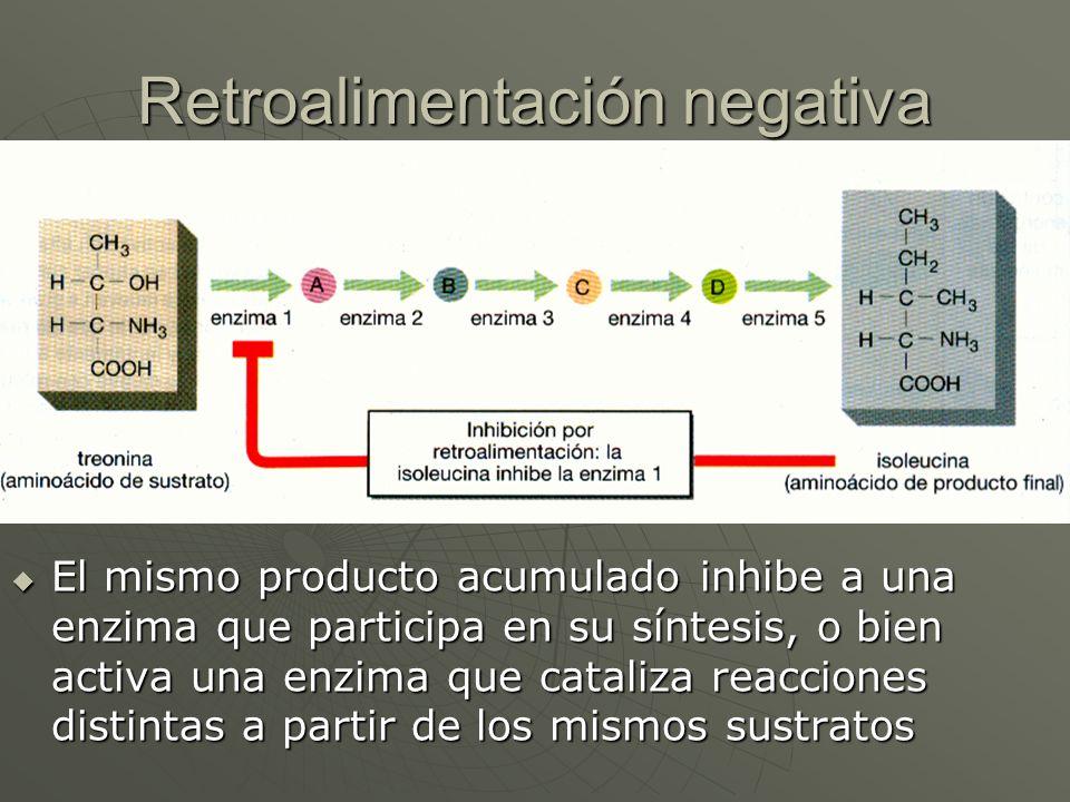Retroalimentación negativa El mismo producto acumulado inhibe a una enzima que participa en su síntesis, o bien activa una enzima que cataliza reaccio