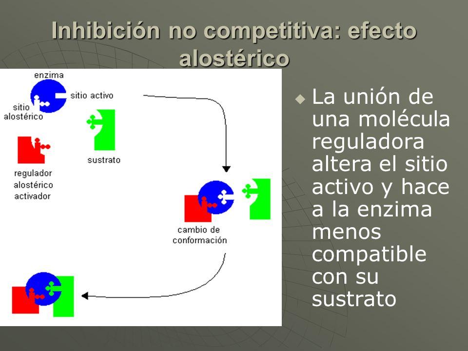 Inhibición no competitiva: efecto alostérico La unión de una molécula reguladora altera el sitio activo y hace a la enzima menos compatible con su sus