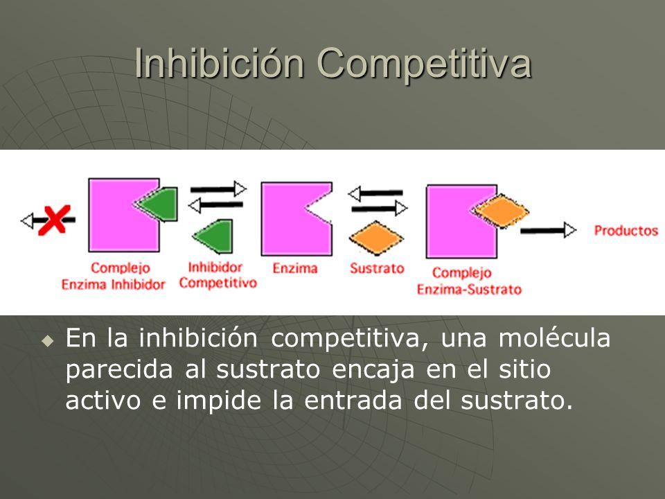 Inhibición Competitiva En la inhibición competitiva, una molécula parecida al sustrato encaja en el sitio activo e impide la entrada del sustrato.