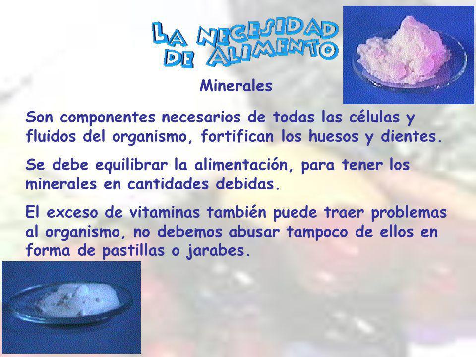 Son componentes necesarios de todas las células y fluidos del organismo, fortifican los huesos y dientes.