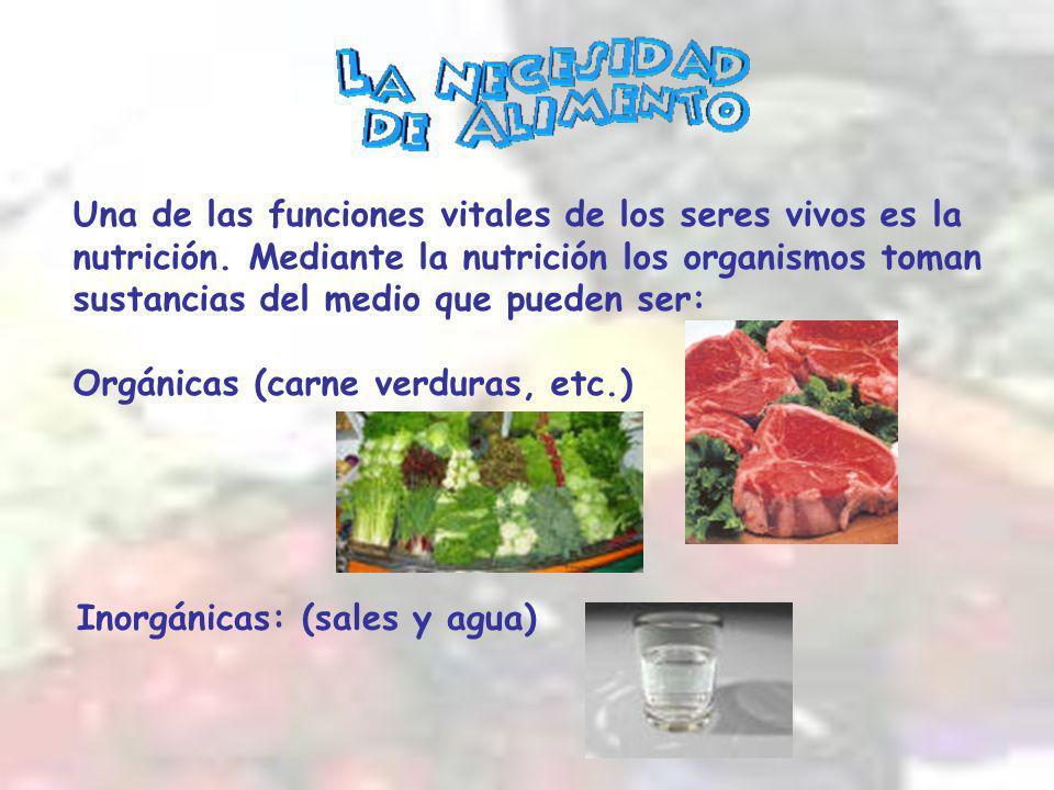 Una de las funciones vitales de los seres vivos es la nutrición.