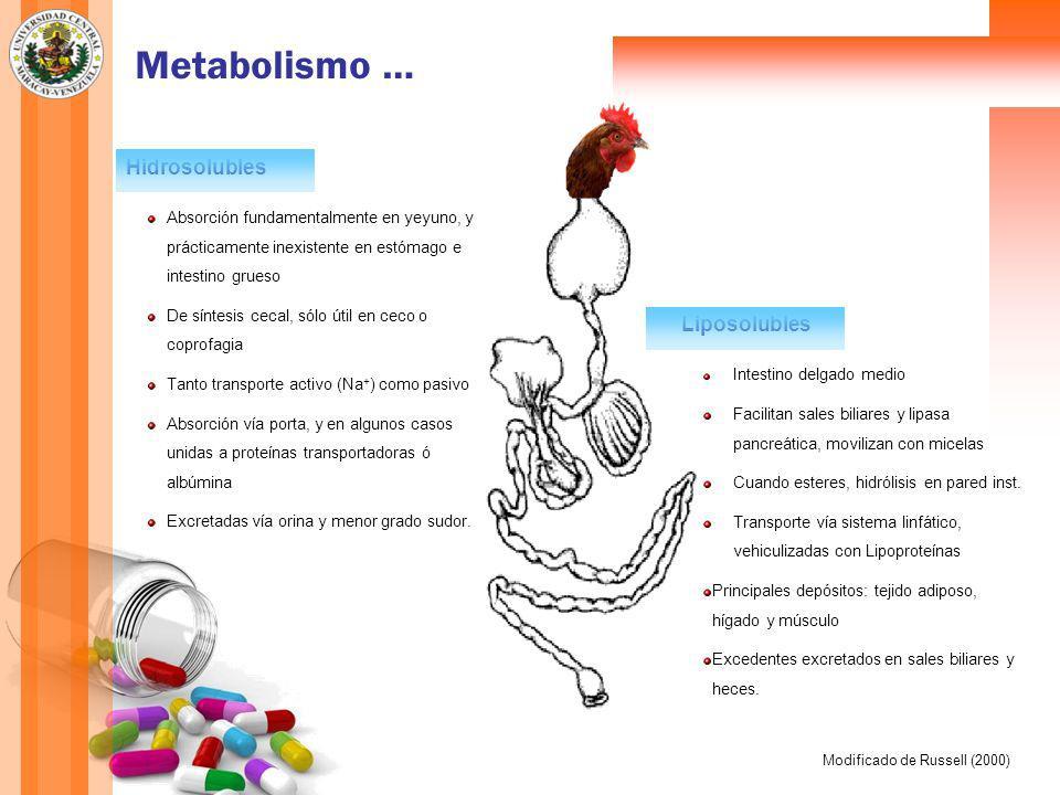Metabolismo … Liposolubles Intestino delgado medio Facilitan sales biliares y lipasa pancreática, movilizan con micelas Cuando esteres, hidrólisis en pared inst.