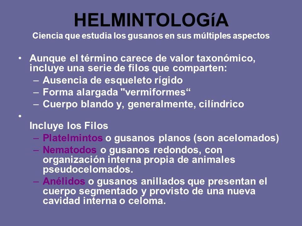HELMINTOLOGíA Ciencia que estudia los gusanos en sus múltiples aspectos Aunque el término carece de valor taxonómico, incluye una serie de filos que c