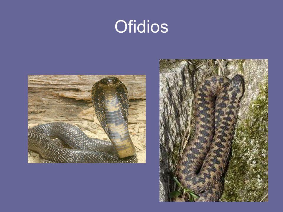 Ofidios